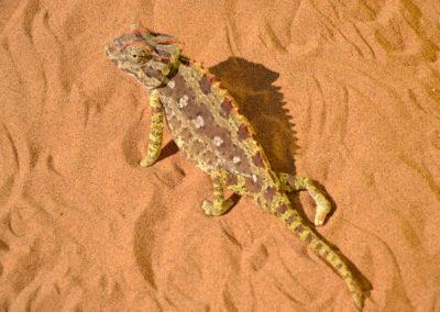 Snake Park - Diario di viaggio in Namibia