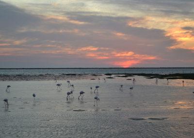 Tramonto lagune di Walvis Bay - Diario di viaggio in Namibia