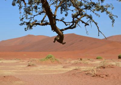 Ingresso Sossusvlei alle spalle del parcheggio 4x4 - Diario di viaggio in Namibia