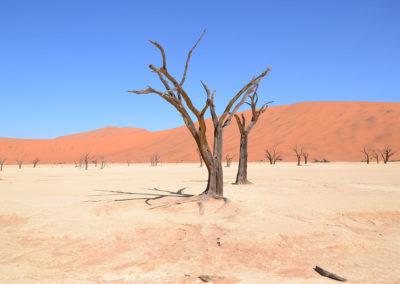 Deadvlei - Diario di viaggio in Namibia