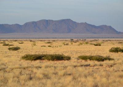 Dintorni Solitaire per l'avvistamento dei ghepardi - Diario di viaggio in Namibia