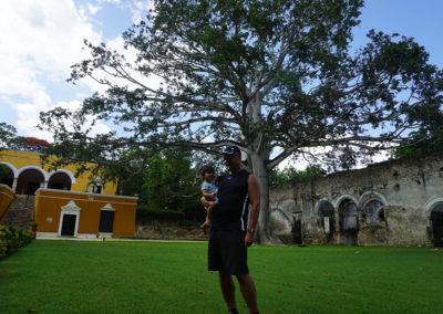 Albero-Ceiba-sacro-ai-Maya-Hacienda-Uayamon-Diario di viaggio in Messico