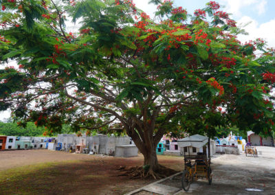 Albero-in-fiore-e-cimitero-tipico-messicano - Diario di viaggio in Messico