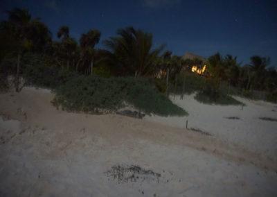 Nidificazione-tartarughe-sulla-spiaggia-di-notte - Akumal-spiaggia - Diario di viaggio in Messico