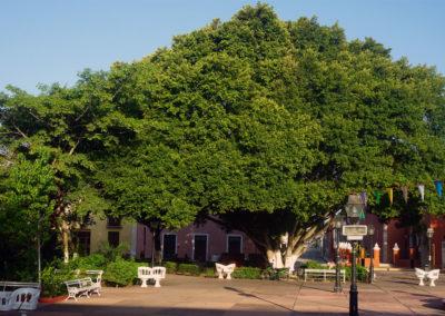 Piazza-de-La-Candelaria---Valladolid-Paanorama--Valladolid-da-terrazza-El-Mason-del-Marques