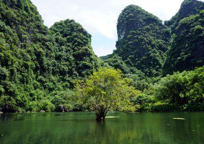 Trang-An-–-Ninh-Binh---Un--albero