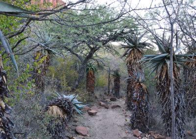 Foresta di Omumborombonga Waterberg National Park - Diario di viaggio in Namibia