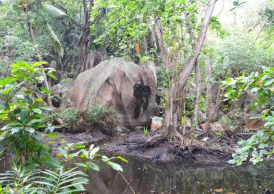 Veuve Nature Reserve La Digue - Diario di viaggio alle Seichelles