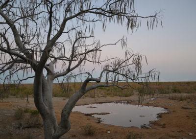 pozza Halal -Etosha alba - Diario di viaggio in Namibia