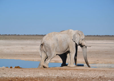 Etosha - Diario di viaggio in Namibia