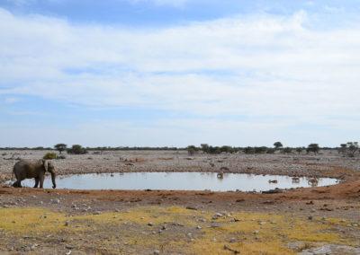 Pozza Okuakuejoe Etosha - Diario di viaggio in Namibia