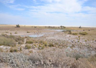 Pozza namutoni Etosha - Diario di viaggio in Namibia