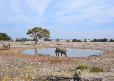 Pozza Okuakuejo Etosha - Diario di viaggio in Namibia