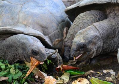 tartarughe giganti a Mahè - Diario di viaggio alle Seichelles