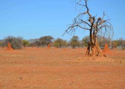 Strada Windhoek Waterberg - Diario di viaggio in Namibia