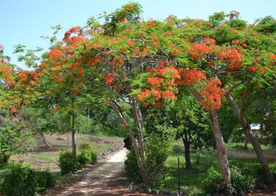 Sentiero per la-Playita Las Galeras - Diario di viaggio a Santo Domingo