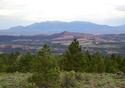 Homestead Overlook Dixie National Forest - Diario di viaggio in USA