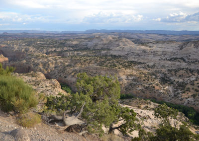 Calf Creek Viewpoint Dixie National Forest - Diario di viaggio in USA