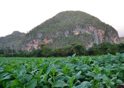 Piantagione di tabacco e mogotes, Vinales - Diario di viaggio a Cuba