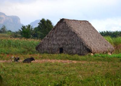Casas de Tabaco, Vinales - Diario di viaggio a Cuba