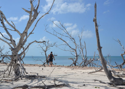Foresta di tronchi, spiaggie est di Cayo Levisa Spiaggie a est di Cayo Levisa - Diario di viaggio a Cuba