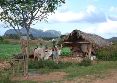 Vinales campagna - Diario di viaggio a Cuba