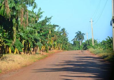 Piantagione di banane, strada per Palma Rubia - Diario di viaggio a Cuba