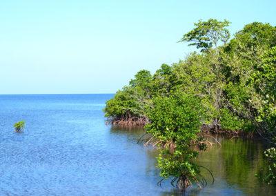 Mangrovie di Palma Rubia - Diario di viaggio a Cuba